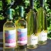 vinoscirce_vinas